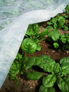 Protectia plantelor contra inghetului