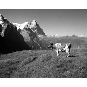 Tablou Peisaj de munte