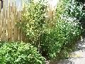 Gard din bambus,