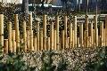 Bordura din bambus,