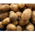 Cartofi noi kilogram