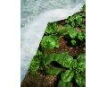 Folie antiinghet pentru plante Tenax Ortoclima 1.6x500m