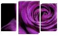 Tablou trandafir mov