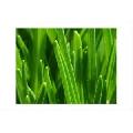 Verde (45 x 30 cm)