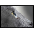 Ochi de Pisica (45 x 30 cm)