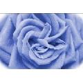 Trandafir Digital (45 x 30 cm)