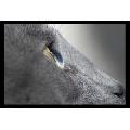 Ochi de Pisica (91 x 61 cm)