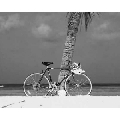 Tablou Bicicleta la plaja