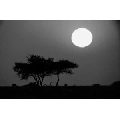 Tablou Luna plina