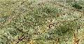 Marmura Rainforest Verde lustruit lastre 2cm