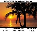 Fototapet Palmy Beach Sunrise cod 8-255