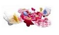 Hello Kitty Set Casuta - ARTHK65018