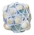 Glob bleu cu scoici albe