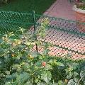 Plasa protectie pentru plante Tenax Floret Verde 0.6 x 25m