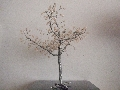 copacel decorativ